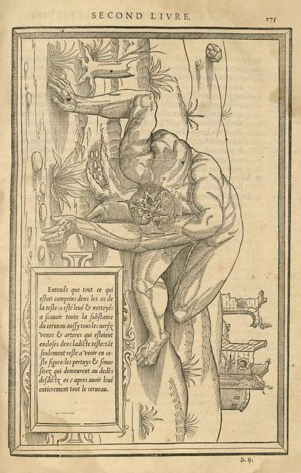 La dissection des parties du corps humain, p. 275