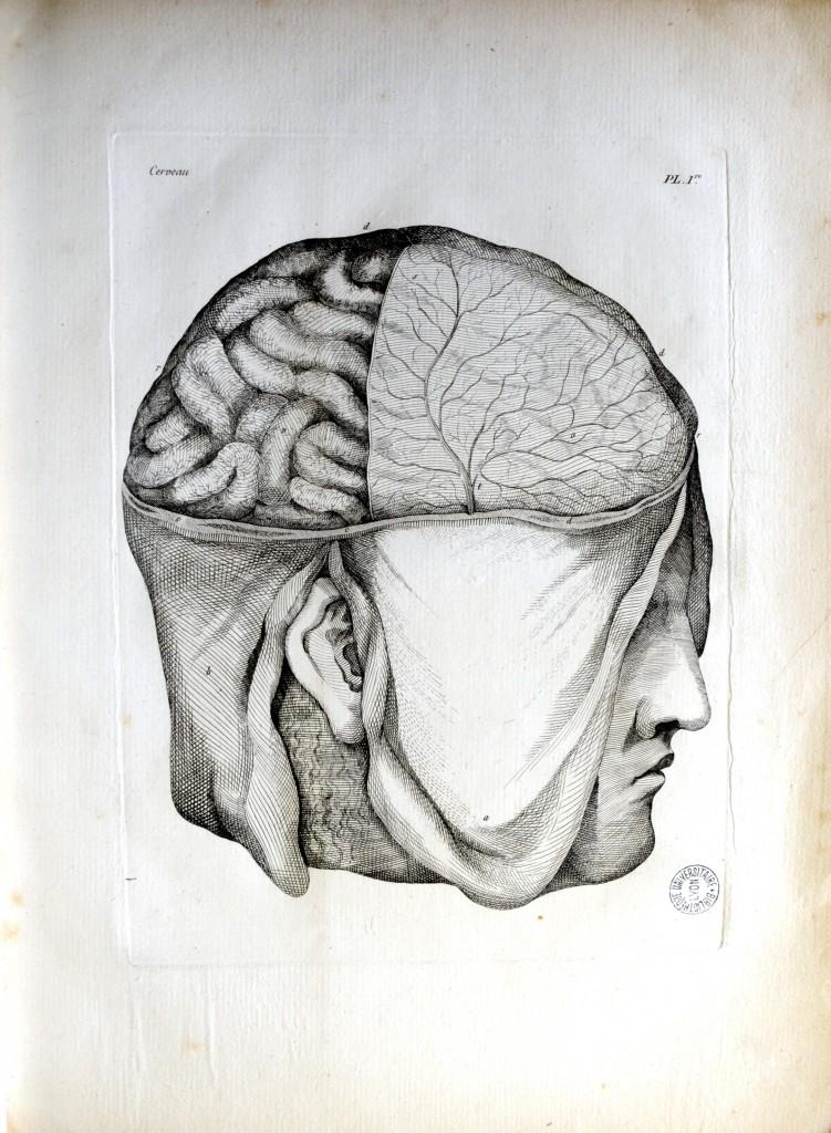 Planches pour les oeuvres de Vicq d'Azyr. Paris: L.Duprat-Duverger, 1805. Pl. I. Cote 11155