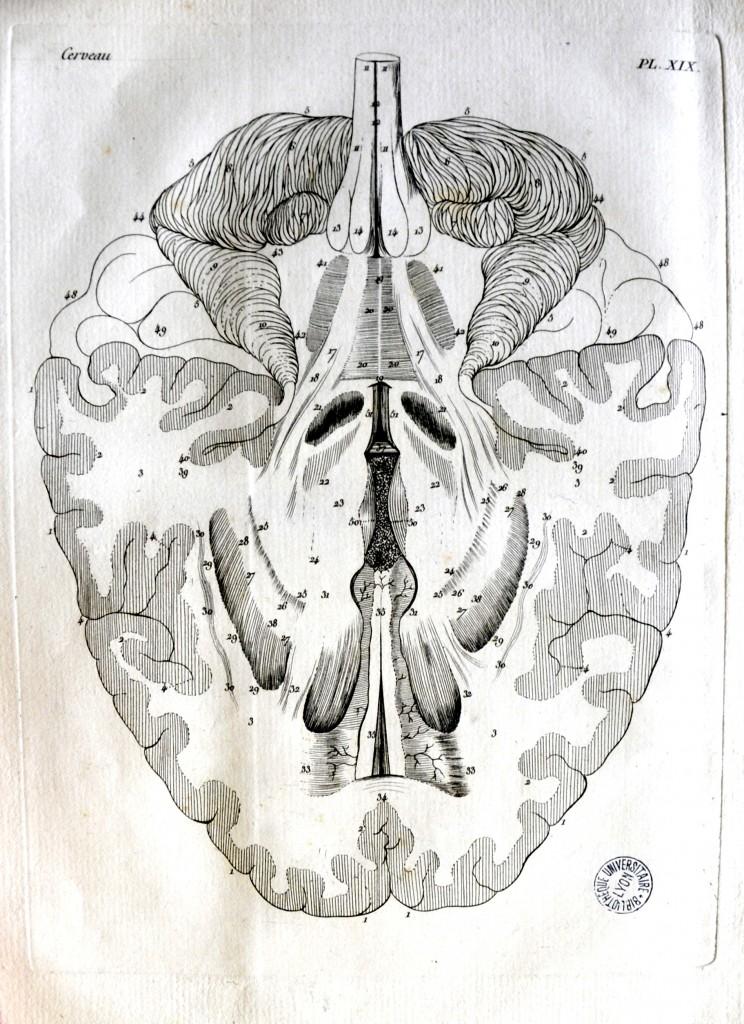 Moreau, Jacques-Louis. Planches pour les œuvres de Vicq d'Azyr. Paris: L.Duprat-Duverger, 1805. Pl. XIX. Cote 11155