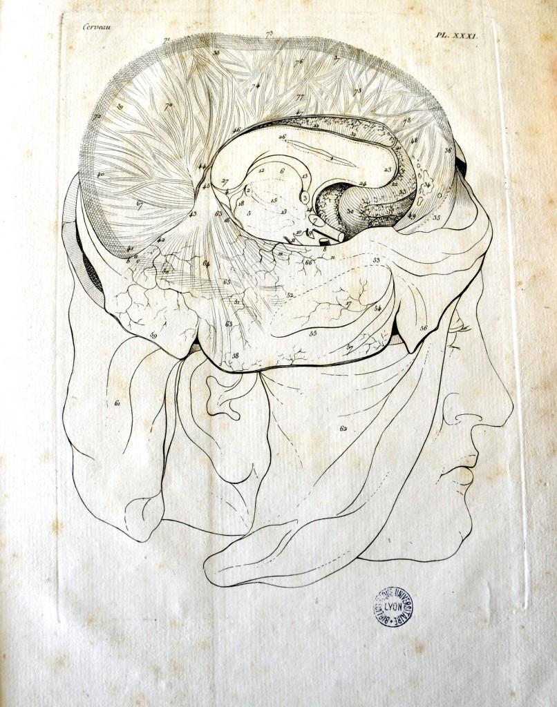 Moreau, Jacques-Louis. Planches pour les œuvres de Vicq d'Azyr. Paris: L.Duprat-Duverger, 1805. Pl. XXXI. Cote 11155