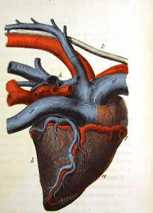 Coeur (6)