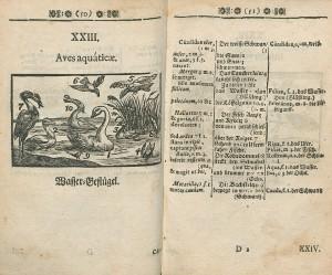 Chapitre 23 d'une éd. bilingue latin-allemand parue à Nuremberg en 1682 ? Cote : 1R 36521