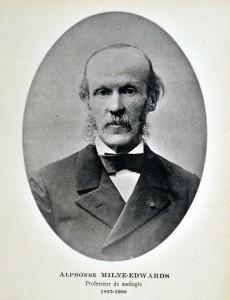 Milne Edwards (3)