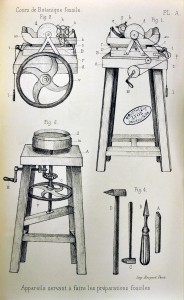 pl. A  Renault, Bernard. Cours de botanique fossile, 1ère année. Masson, 1881.