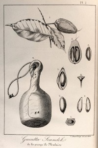 Jardin botanique (4)