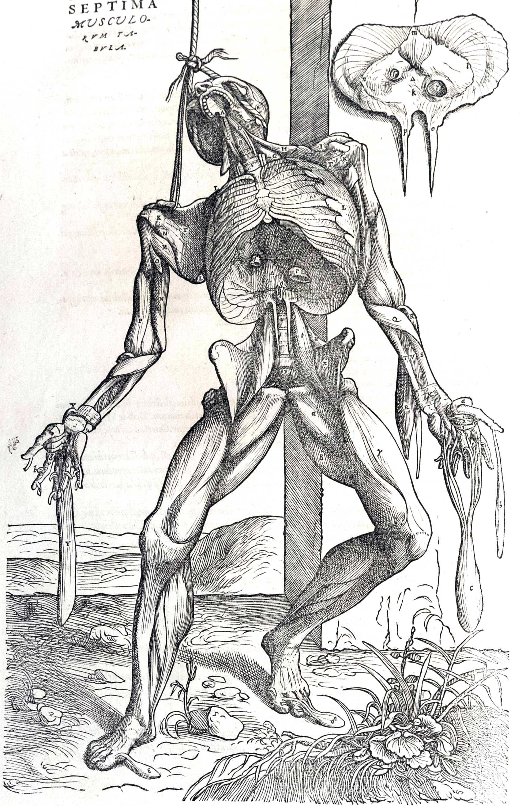 Planches anatomie (15)