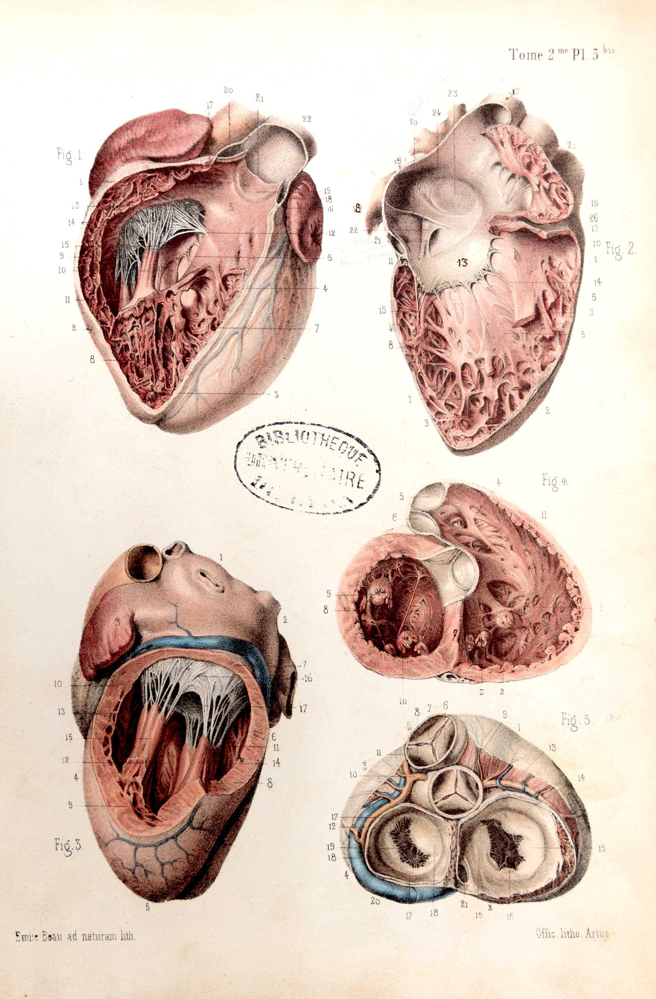 Traité d'anatomie ancien (10)