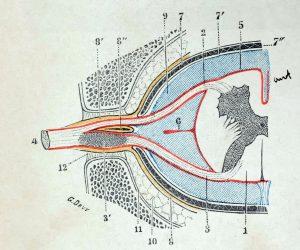 Traité d'anatomie ancien (14)