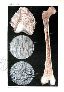 Traité d'anatomie ancien (17)