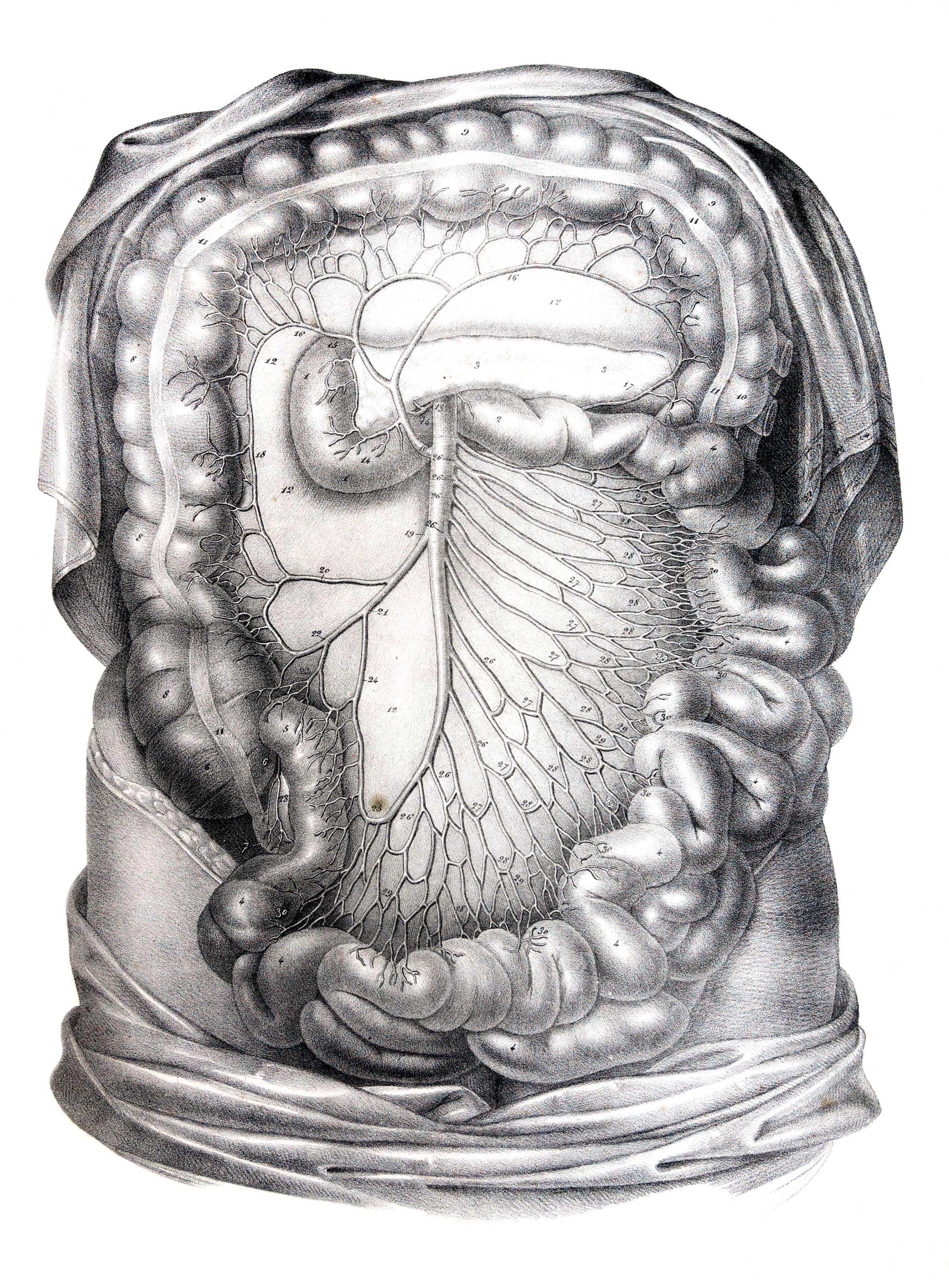 Traité d'anatomie ancien (2)