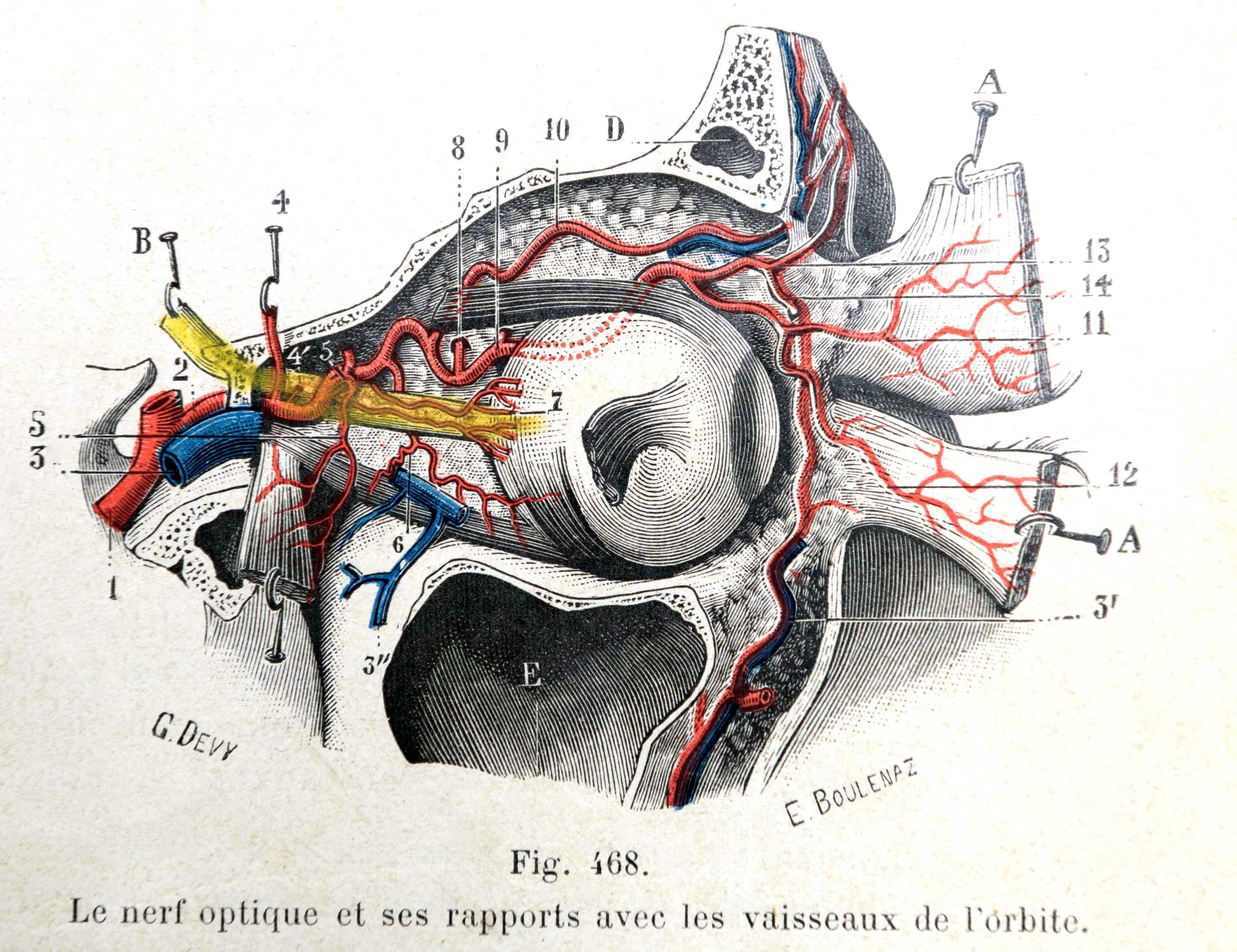 Traité d'anatomie ancien (6)