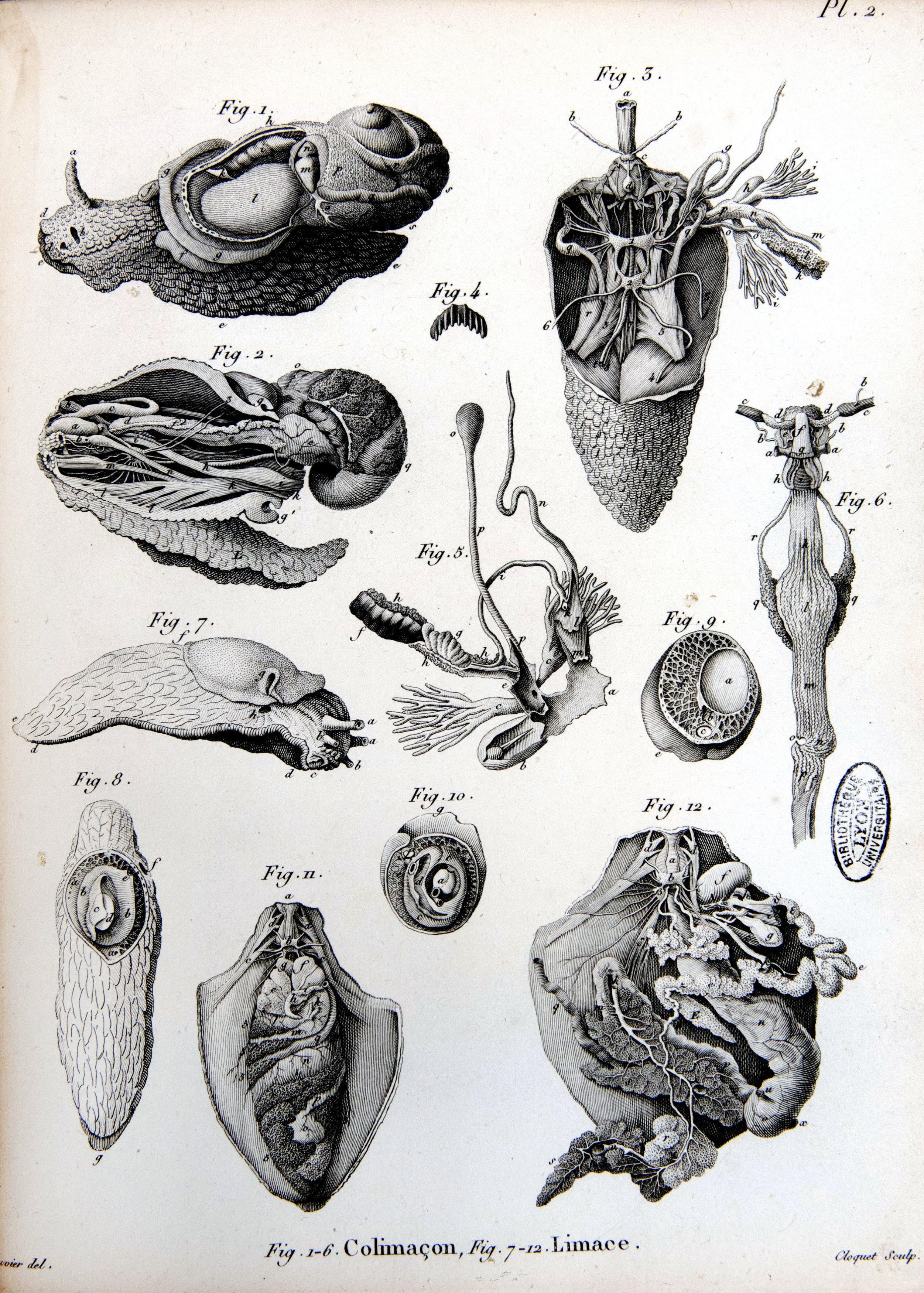 Mollusques (6)