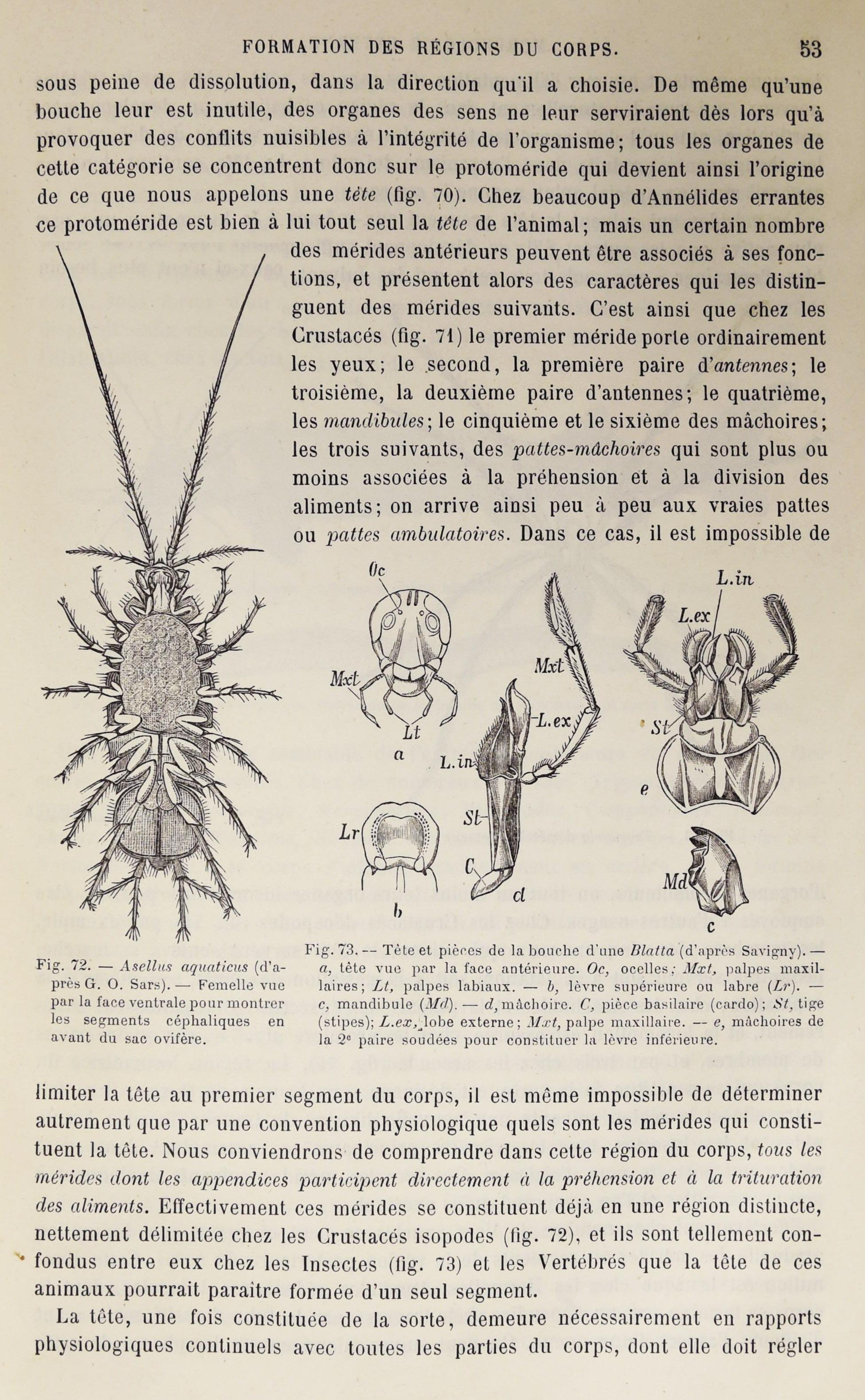 Colonies animales 37