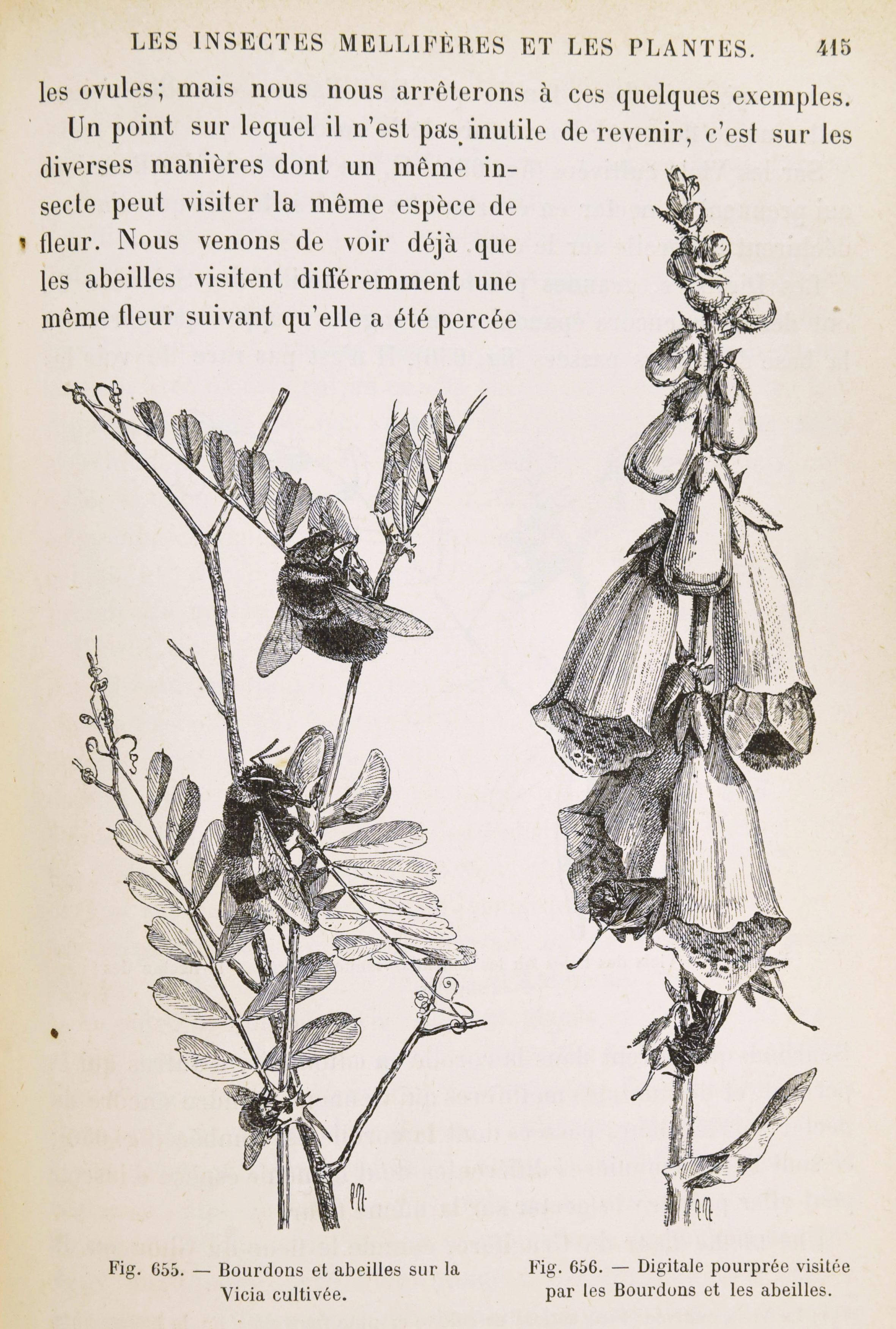 Bonnier - Les plantes 10