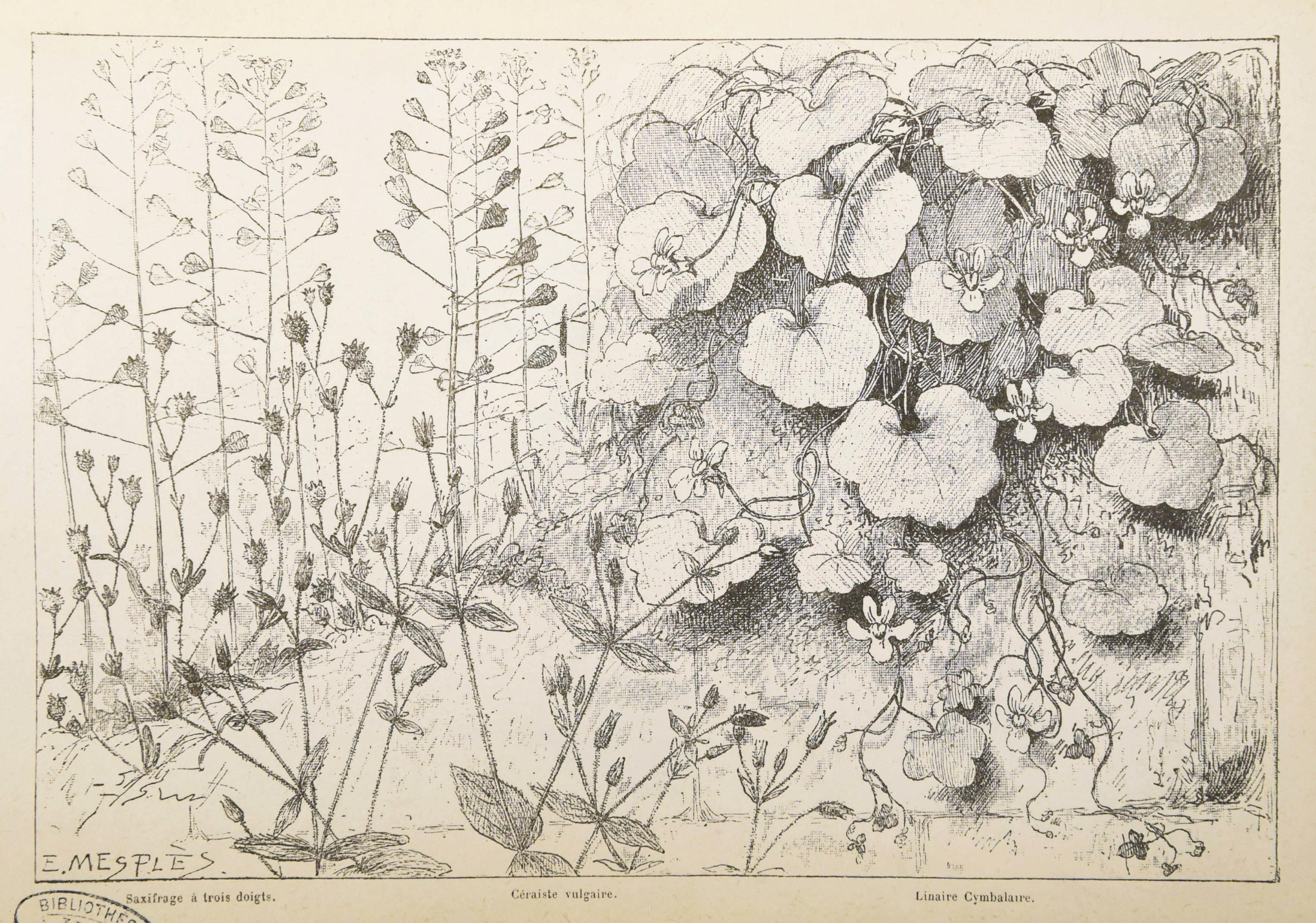 Bonnier - Les plantes 3