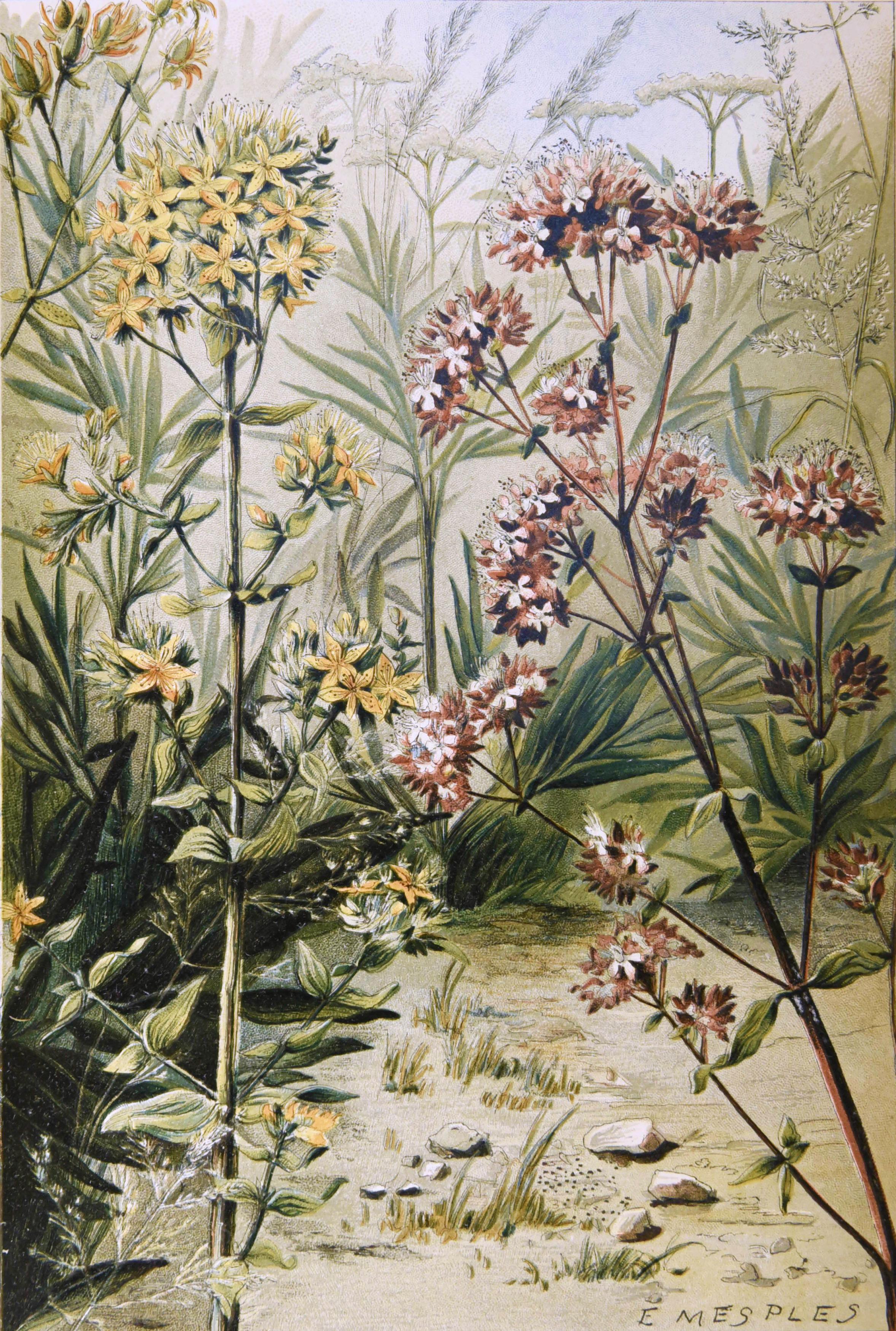 Bonnier - Les plantes 8