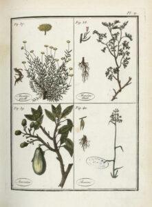 Plantes usuelles, indigènes et exotiques. 1807