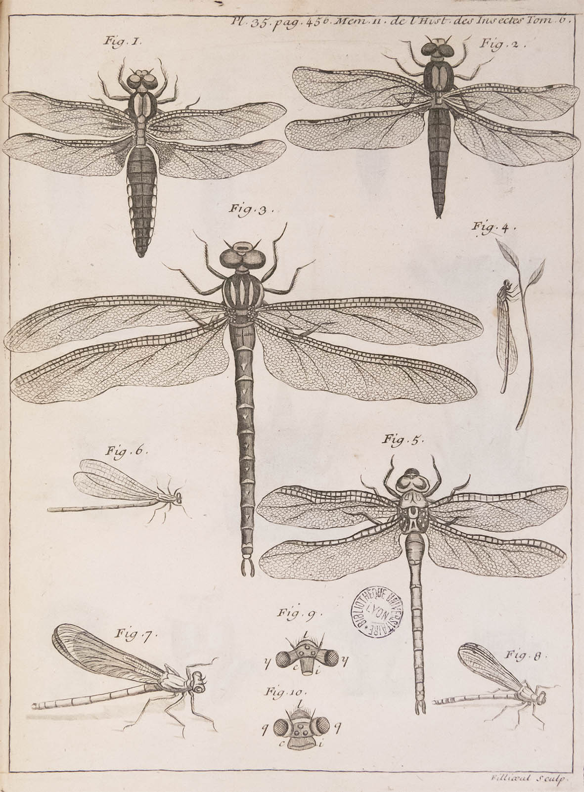 Insectes_59